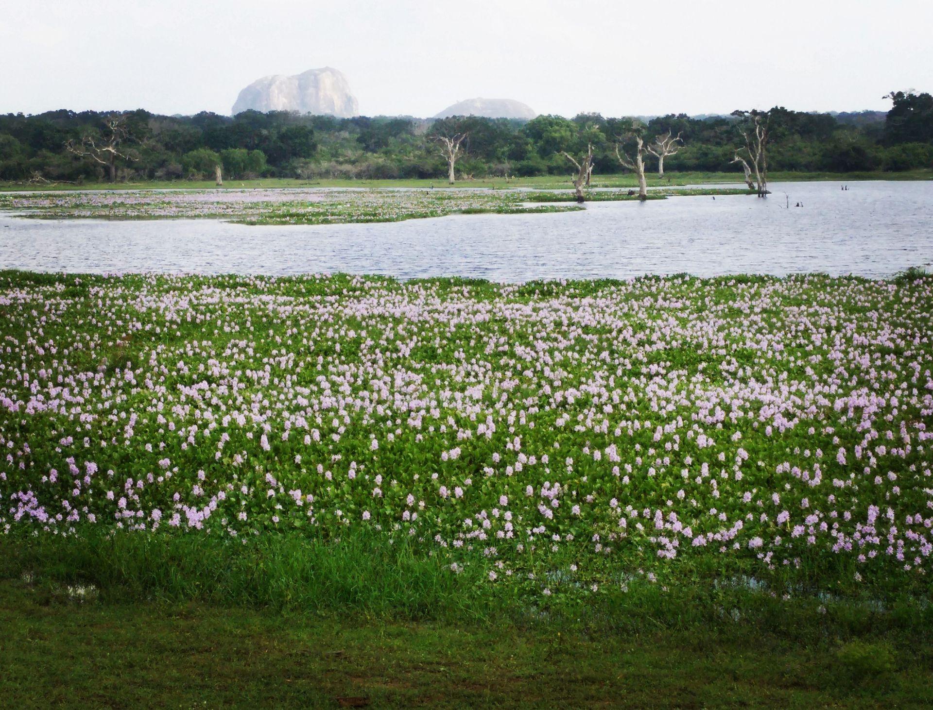 Blumenmeer im Yale Nationalpark